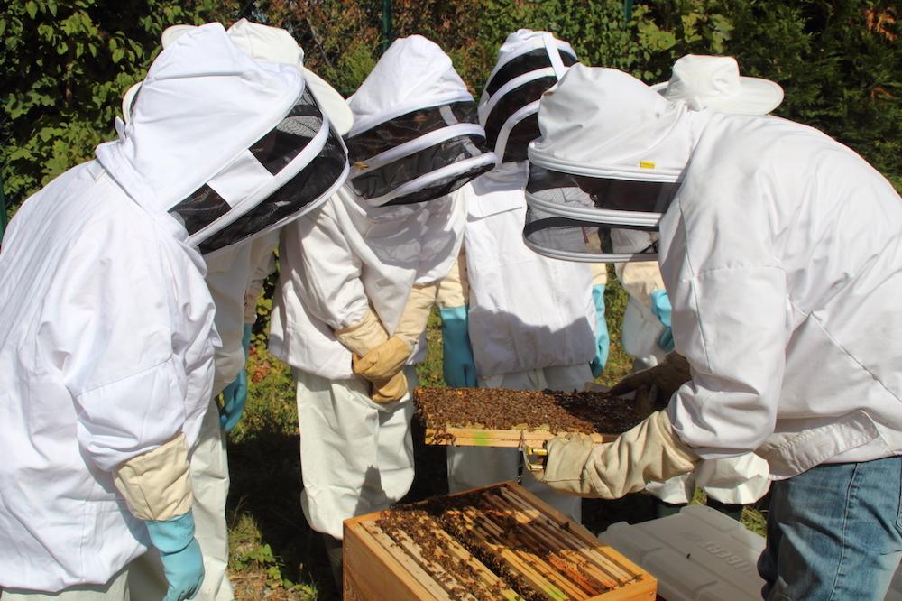 Apilia - Installation de ruches en entreprises